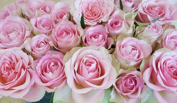 roses-2261091_960_720.jpg